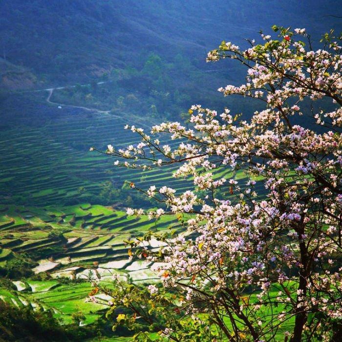 Vẻ đẹp mùa xuân vùng rẻo cao Tây Băc khiến bao người vấn vương