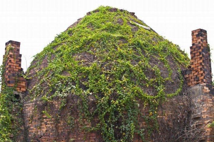 Những lò gạch đã bám rêu phong, phủ kín dây leo theo thời gian