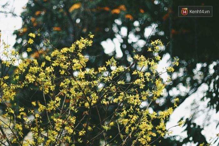 Lễ hội hoa anh đào Nhật Bản - Hà Nội