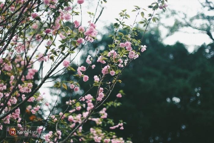 Vẻ đẹp của những cành hoa được trưng bày tại vườn hoa Lý Thái Tổ hôm nay.