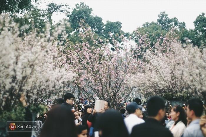 Không khí nhộn nhịp tại vườn hoa Lý Thái Tổ.
