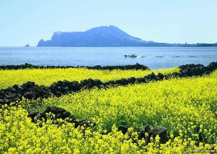 Jeju - Khung cảnh lãng mạn sẽ giúp bạn lấy lại tinh thần cho năm mới