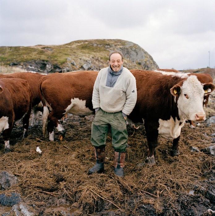 Roger Møen đang tận hưởng giây phút hạnh phúc bên những con bò của mình ở Træna, Na Uy.