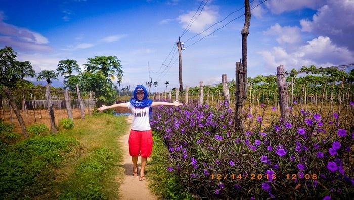 Vườn nho xanh ngắt hai bên đường tô điểm cho thiên nhiên Phan Rang thêm xinh đẹp