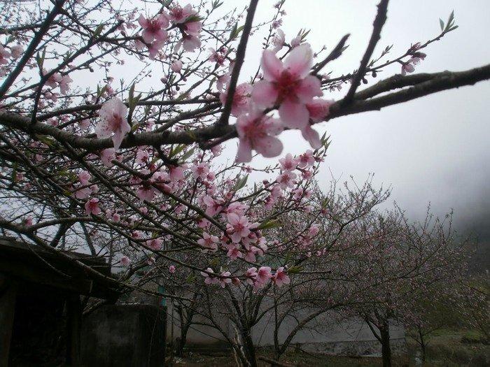 Mùa xuân Tây Bắc