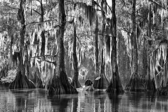 Hàng bách mờ ảo trong sương sớm ở Louisiana, Mỹ.