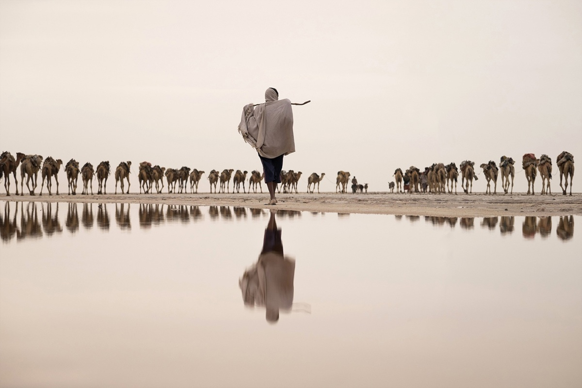 Bức ảnh của Joel Santos ghi lại khoảnh khắc một thợ muối cùng đàn lạc đà đến nơi khai thác ở Afar, Danakil, Ethiopia.