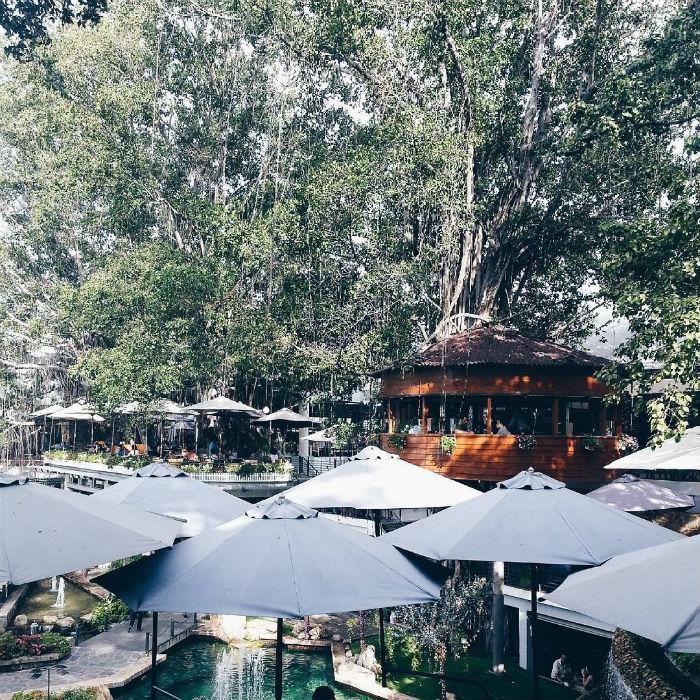 Không gian xanh mát của cafe trên cây