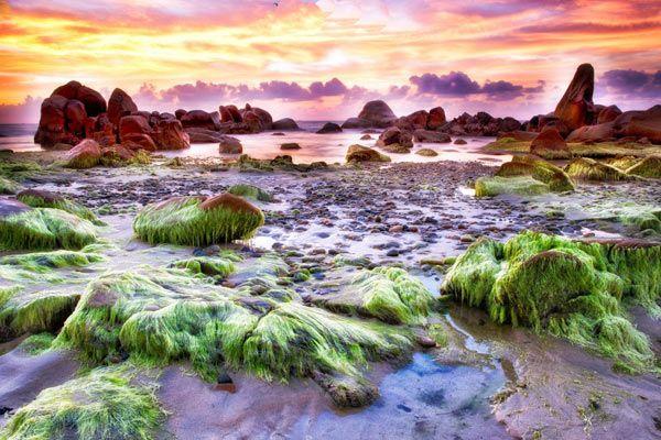 Lung linh bãi đá ở biển Cổ Thạch