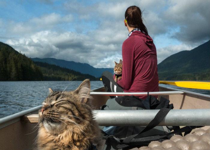 kinh nghiệm đưa thú cưng đi du lịch