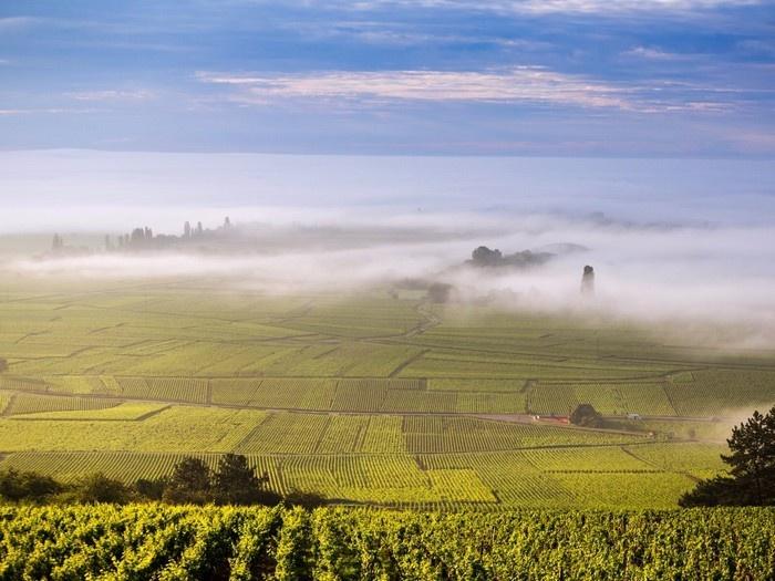 Cote Dor, Burgundy
