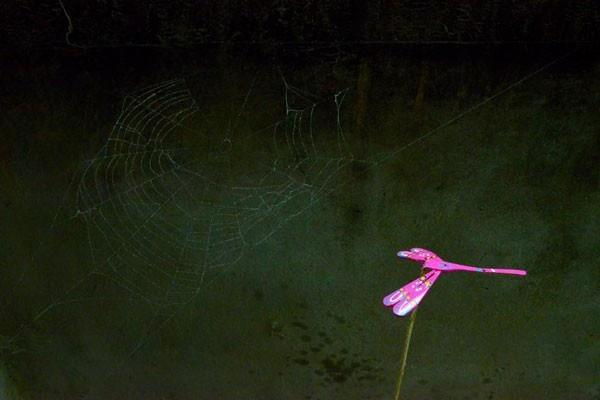 Tuổi thơ mỗi người ít nhiều gắn bó với cánh chuồn chuồn thơ mộng