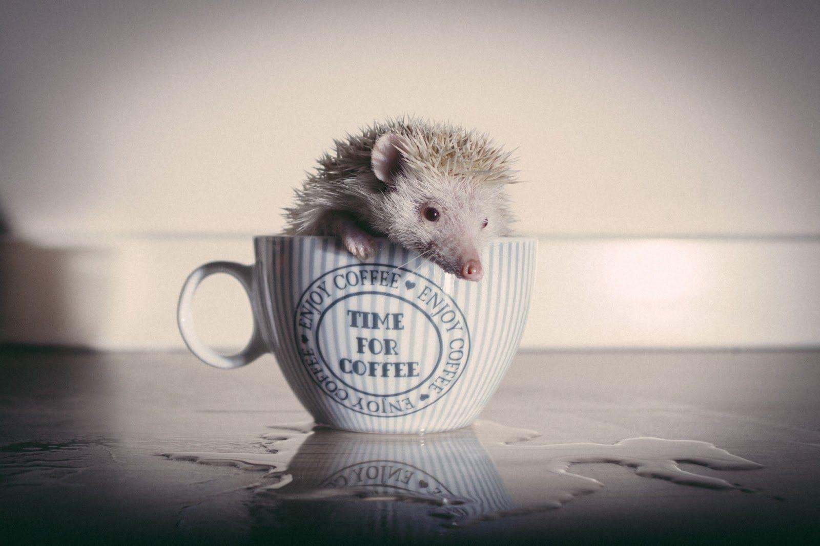 Café thú cưng