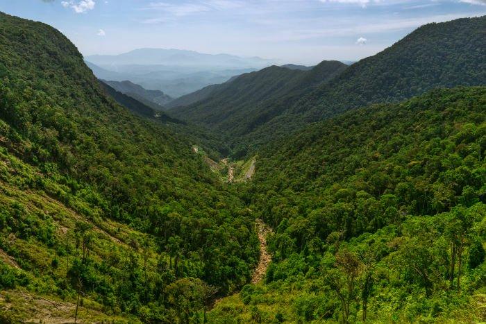 Xanh mướt cảnh rừng - Ảnh: Lee Starnes