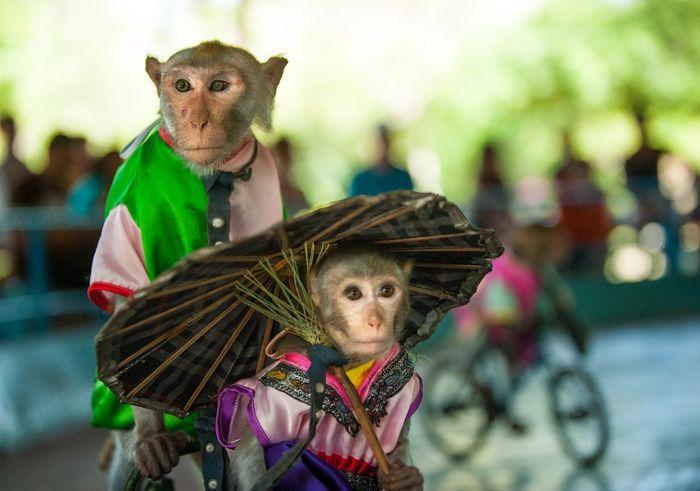 Review kinh nghiệm du lịch Đảo Khỉ Nha Trang tự túc cực chi tiết