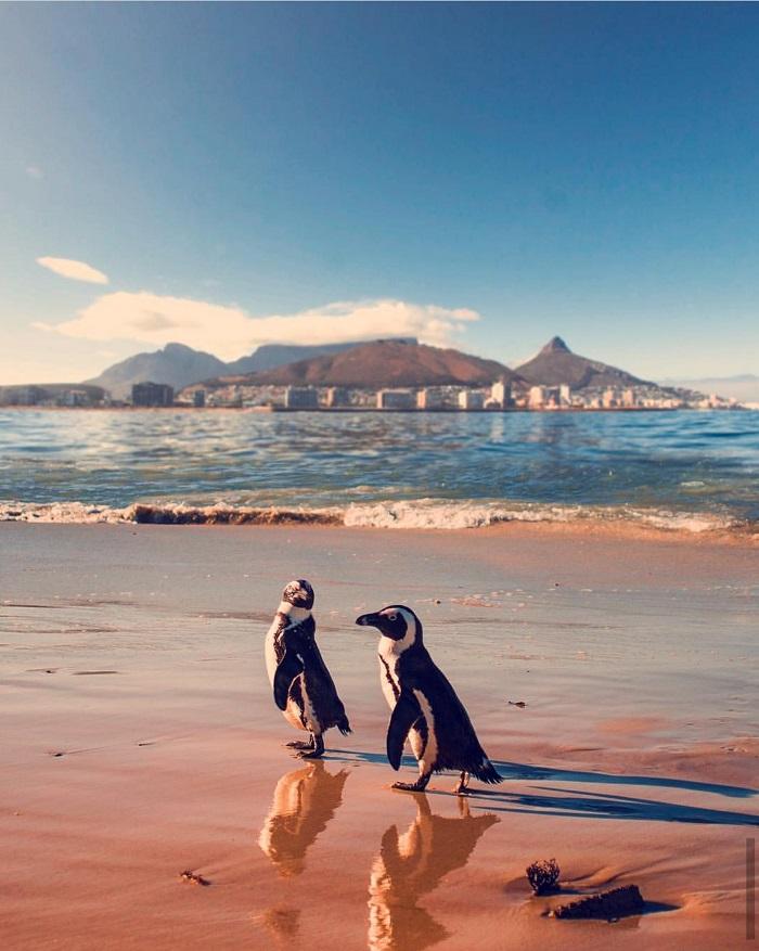 Những địa điểm du lịch Cape Town Nam Phi