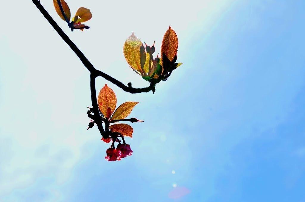 Có một loài hoa khoe sắc trên độ cao ngút ngàn Bà Nà
