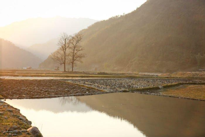 Nơi đó còn có cánh đồng Ngọc Chiến nơi sản sinh ra thứ nếp tan ngon diệu kỳ