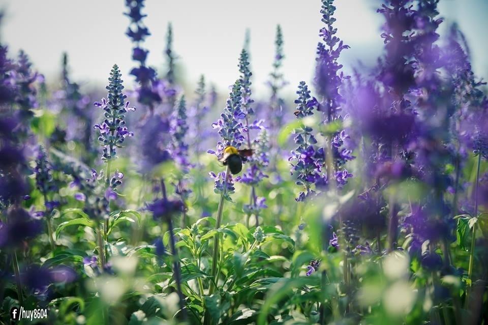 Chú ong mải mê hút mật