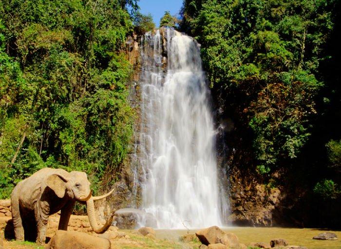 Có con voi già đứng yên bên thác - Ảnh: KienTrinh