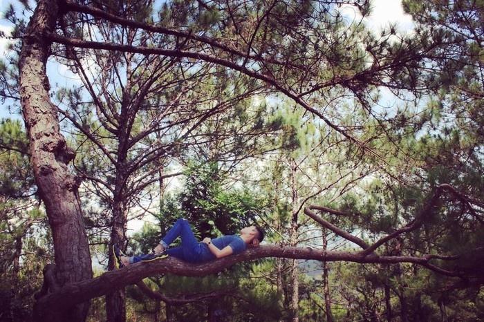 Tựa vào rừng thông Đà Lạt