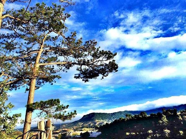 Tán cây như reo vui giữa gió - Ảnh: sưu tầm