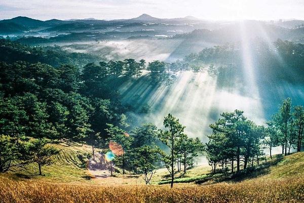 Đại ngàn ngập nắng - Ảnh: sưu tầm