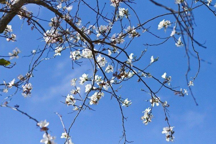 Lấm tấm sắc trắng trên nền trời xanh xanh Đà Lạt