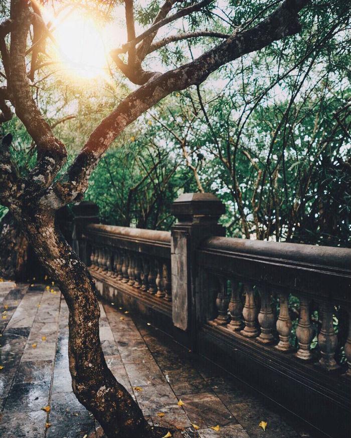 Đây nắng thơ tình hắt xuống cây xanh - Ảnh: @eatandtreats