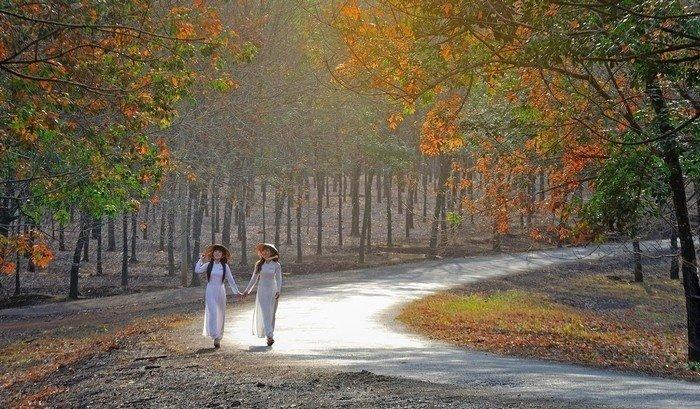 Ngẩn ngơ trước mùa thay lá của rừng cao su