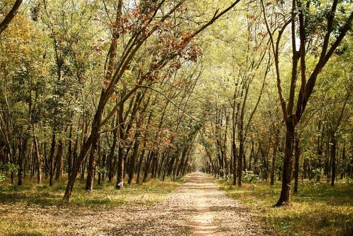 Cả khu rừng như khoác lên tấm áo mới