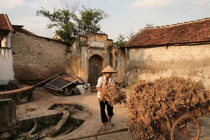 Tháng 9-10 cũng là thời điểm người dân Đường Lâm thu hoạch lạc.