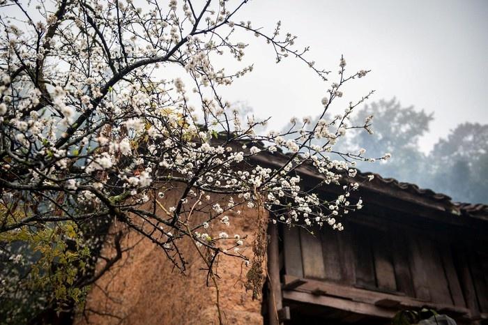 Yêu lắm những loài hoa mùa xuân ở mảnh đất Hà Giang