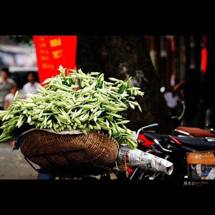 Rong ruổi khắp phố phường Hà Nội