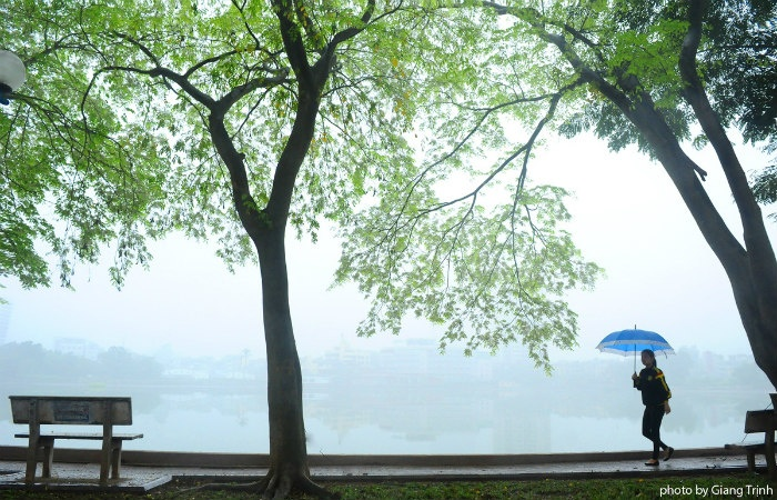 Màu xanh non của cây sưa mang đến không khí rất xuân cho khu vực hồ Giảng Võ