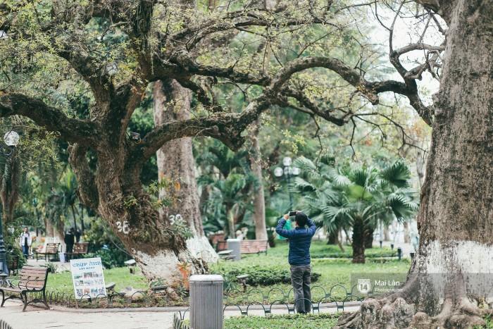 Ai cũng muốn đưa máy lên chụp lại một kiểu ảnh khi bắt gặp những tán cây thay lá.