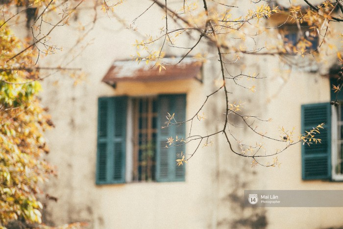 Tiết trời tháng 3, đi dạo trên hồ Gươm hay những khu phố cổ, đừng quên tìm kiếm những khóm cây đang thay lá. Bạn sẽ thấy lòng mình dịu lại vì những chòm lá úa đẹp như một bức tranh.