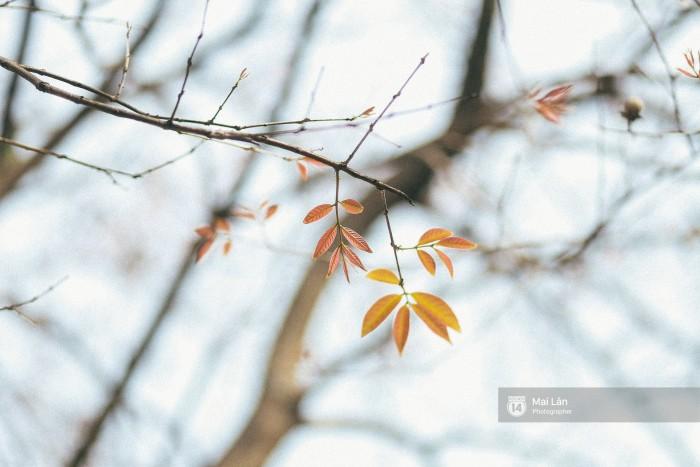 Những chiếc lá non đỏ cam đâm chồi giữa khung cảnh ảm đạm của ngày tháng 3.
