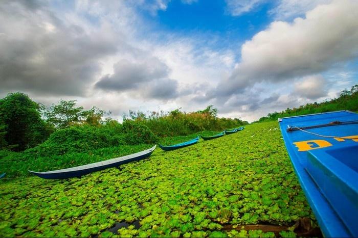 Cùng chiếc thuyền máy khám phá U Minh Thượng