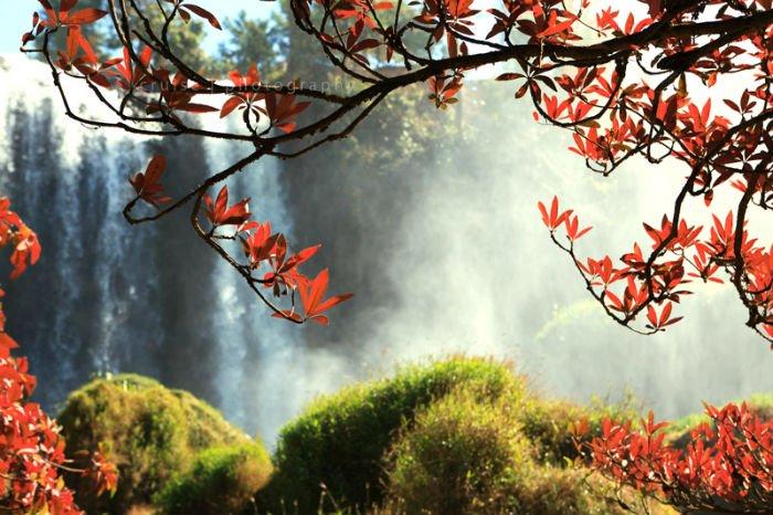 Và đâu đó là những chòm lá đỏ rực ẩn mình trong nắng - Ảnh: Huanscavi
