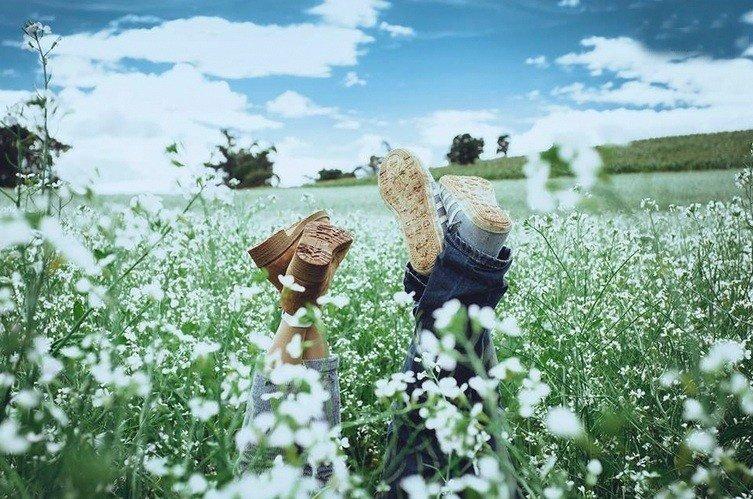 Thước ảnh độc đáo, sáng tạo của giới trẻ mỗi khi về ngắm hoa cải trắng Lâm Đồng