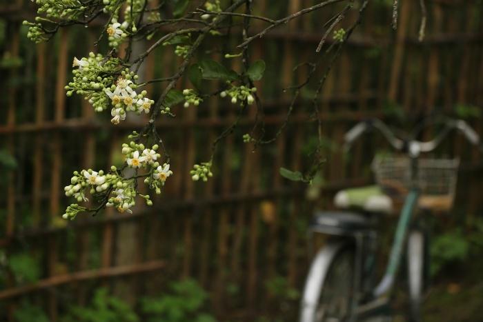 Trên nhiều con phố mùa này hoa bưởi được bày bán thơm nức mũi. Tuy nhiên để đắm mình trong hương thơm đặc trưng của tháng 3, không ít người đã tìm về khu Cầu Diễn.
