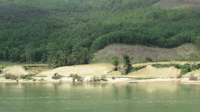 Thiên nhiên tươi đẹp ven sông Thu Bồn