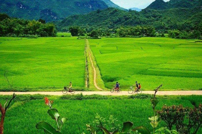 Những đứa trẻ đạp xe lang thang quanh cánh đồng Mai Châu
