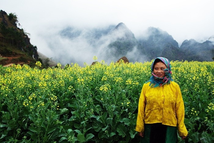 Sắc cải vàng rực rỡ trong tiết xuân Hà Giang