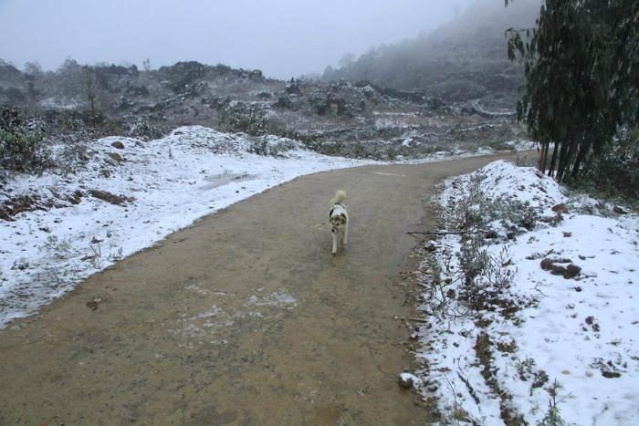 Chú chó chạy loăng quăng
