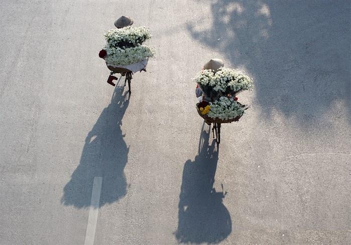 Những giỏ hoa cúc họa mi cứ thế mà rong rủi khắp mọi nẻo đường Hà Nội.