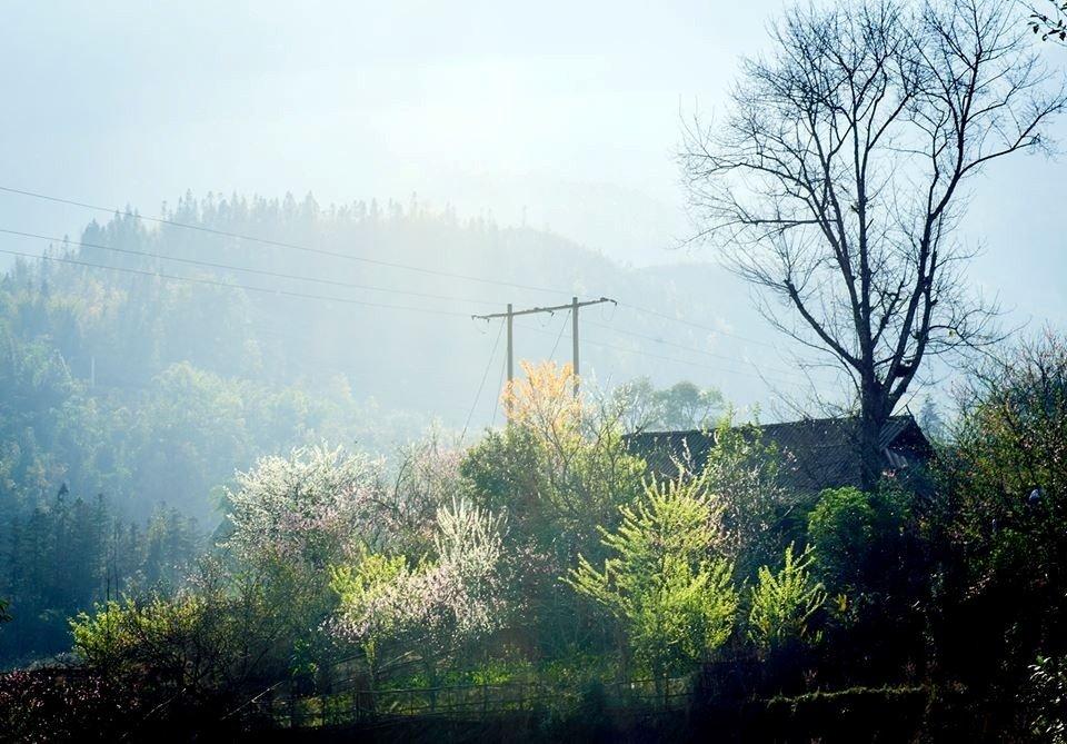 Trong sương sớm Sa Pa