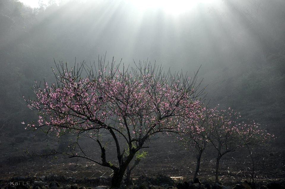 Đón sương sớm Mộc Châu
