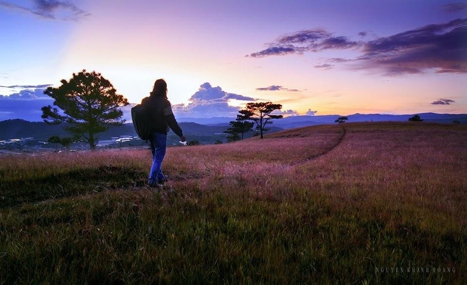 Đón hoàng hôn lung linh giữa đồi cỏ hồng Lâm Đồng
